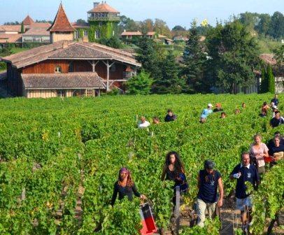 smith harvest 2012 2016 Bordeaux Harvest and Vintage Report