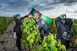 2012 Brane Cantenac Harvest1 300x199 2012 Bordeaux Harvest, Margaux, St. Julien, Pauillac, St. Estephe News
