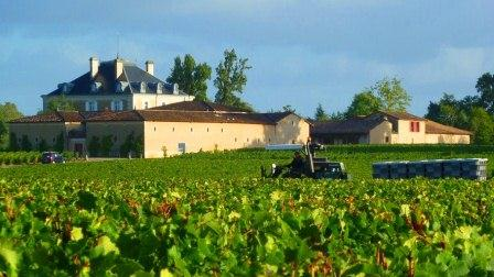 2012 Haut Bailly Harvest1 Chateau Haut Bailly Pessac Leognan, Complete Guide