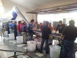 2012 Malartic Lagraviere 300x225 2012 Bordeaux Harvest Pessac Leognan News Updates