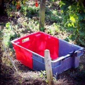 2012 Palmer harvest 2 300x300 2012 Bordeaux Harvest, Margaux, St. Julien, Pauillac, St. Estephe News