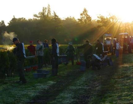 2012 Hautbailly Harvest