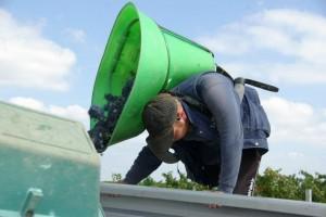 2012 brane cantenac harvest 300x200 2012 Brane Cantenac Harvest News, Wet Spring, Dry Summer