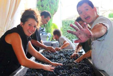 2012 Grand Puy Ducasse Harvest Sorting