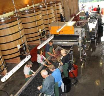 2012 Marquis dAlesme 2012 Marquis d'Alesme 2012 Labegorce Margaux Vintage Harvest Report