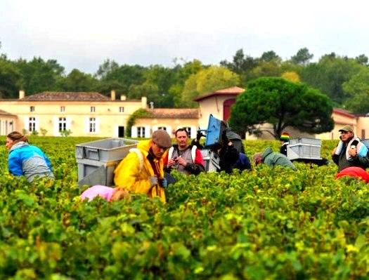 2012 domaine de chevalier harvest
