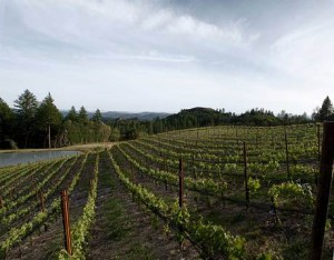 Melka Wines 300x234 Melka Wines Napa Valley California Cabernet Sauvignon Wine