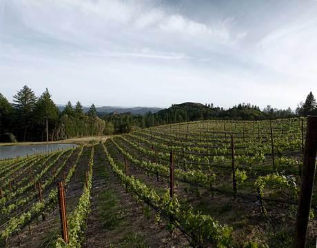 Melka Wines Wine Tasting Notes, Ratings