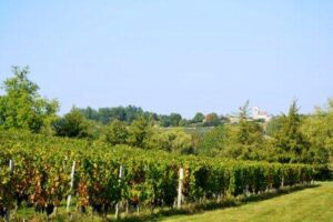 Entre Deux Mers 300x200 Entre Deux Mers Bordeaux Wine Guide, Chateaux, Producers, Character