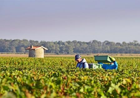 2012 Bordeaux harvest grape picking Complete Guide to all the Small, Lesser Known, Bordeaux Appellations