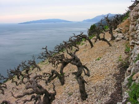 The Balkan Wine Industry Rapidly Gaining Attention with Consumers