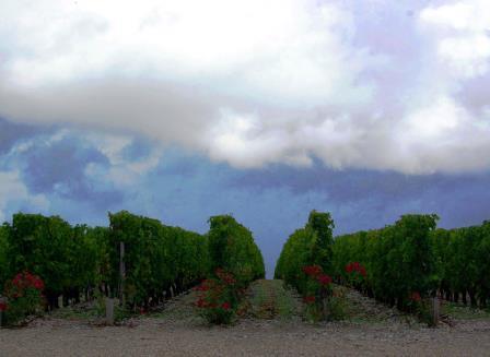 Bordeaux Harvest Storm2 Second Storm in a Week Thrashes Bordeaux Vineyards