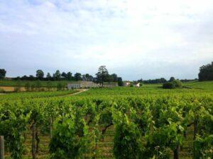Bordeaux in the vines