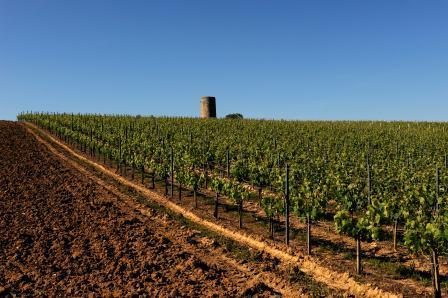 Montlandrie1 Chateau Montlandrie Cotes de Castillon Bordeaux, Complete Guide