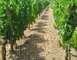 Bordeaux Gravel Terroir 300x232 Dirty Little Secret about the Soil, Terroir and Climate of Bordeaux