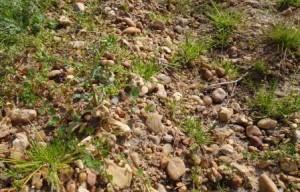 Pessac Leognan Terroir 300x192 Dirty Little Secret about the Soil, Terroir and Climate of Bordeaux