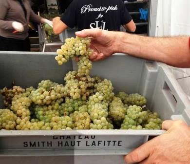 2013 Smith Haut Lafitte White Wine