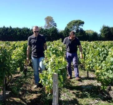 Fieuzal 2013 harvest Stephen Carrier on 2013 de Fieuzal Bordeaux White Wine Harvest