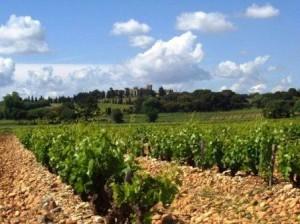 CNDP 51 300x224 Domaine Monpertuis Chateauneuf du Pape Rhone Wine, Complete Guide