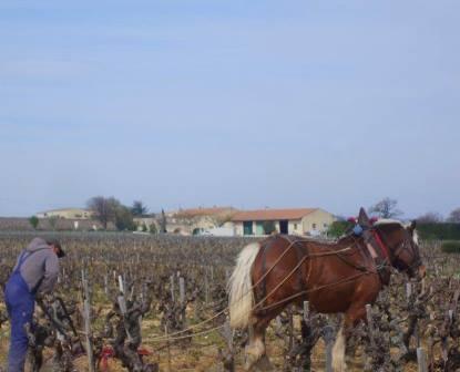 Domaine lOr de Line Domaine lOr de Line Chateauneuf du Pape Rhone Wine, Complete Guide