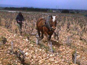 Biscarelle 300x224 Domaine de la Biscarelle Chateauneuf du Pape Rhone Wine Complete Guide