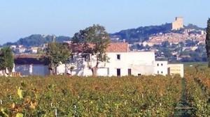 MAS SAINT LOUIS 300x168 Mas Saint Louis Chateauneuf du Pape Rhone Wine, Complete Guide