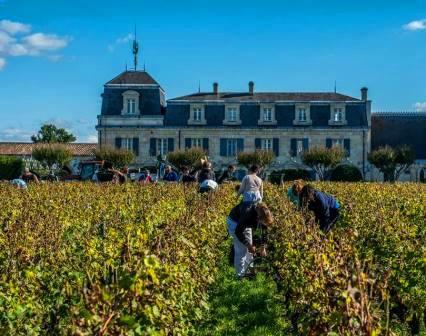 2014 Bordeaux Vintage Summary, Harvest Report