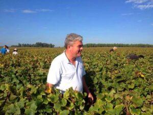 Domaine de Chevalier Harvest