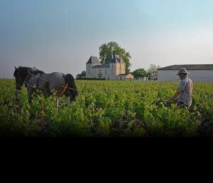 Margaux Horse plough 300x257 2014 Margaux Tasting Notes, Ratings, Reviews and Vintage Report