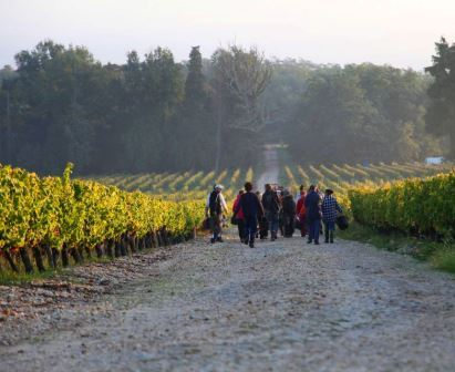 Various Bordeaux Articles to help you Understand Bordeaux Wine