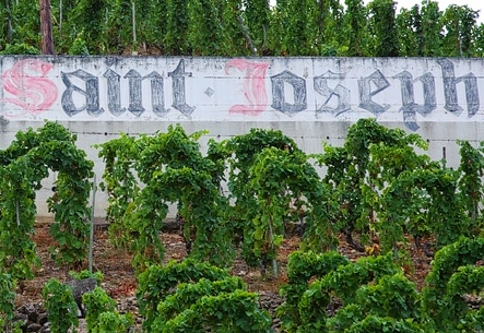 St. Joseph Appellation Rhone Valley St. Joseph Rhone Valley Wine Guide to the Best Producers, Vineyards