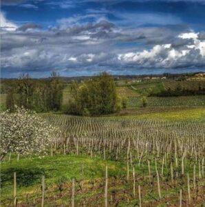 BORDEAUX VINEYARD 298x300 2 Saint Emilion Grand Cru Classe Vineyards Sold in the Same Week!