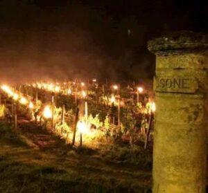 Bordeaux Frost Damage 300x279 Devastating Bordeaux Frost, Up to 90% of Some Vineyards Destroyed