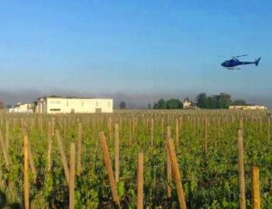 Frost Damage in Bordeaux  300x231 Devastating Bordeaux Frost, Up to 90% of Some Vineyards Destroyed