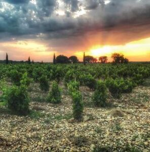 Chateauneuf du Pape Soil Terroir 296x300 2015 Chateauneuf du Pape Tasting Notes Vintage Report for top 250 Wines