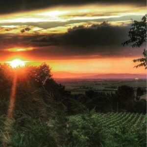 2016 Chateauneuf du Pape Vintage 300x300 2016 Chateauneuf du Pape The Top 200 Wines of the Vintage